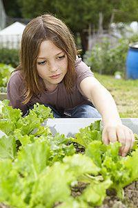 Alimentos orgânicos para as crianças na escola