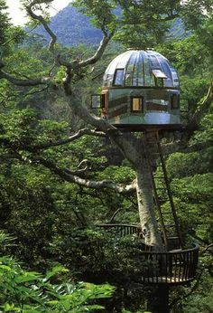 1000 Images About Tree Homes On Pinterest Tree Houses