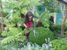 Garden designer Agata Byrne, maintaining my own garden, Art House, Dalkey, Ireland, 2012