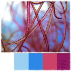{Color Palette Love} Through view