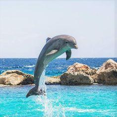 Animales marinos - Ejemplos y curiosidades #delfin                                                                                                                                                      Más