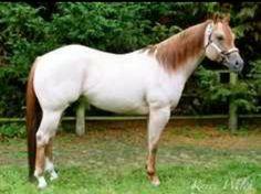 White Strawberry Quarter Horse
