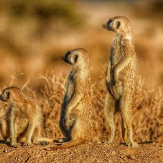 Travel to Kalahari Desert Funny Poses, Dynamic Range, Flora And Fauna, Stretching, Savannah Chat, Books Online, Kangaroo, Countries, Deserts