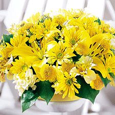 Yellow Pleasure (f21) A brilliant display of cream stock stems, yellow alstroemeria, yellow daisy pompon, yellow button pompon, and yellow asiatic lily stem accented by yellow satin ribbon Your selection is carefully hand wrapped in decorative cellophane and a personalized card is added. http://www.israel-gifts-flowers.com/