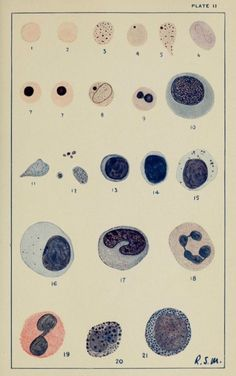 nemfrog - Plate II. Blood constituents. Clinical laboratory...
