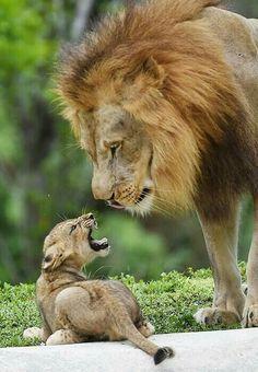 Agora olha que moleque abusado, malcriado....Esse pai ainda perde a paciência  e lhe tira a mesada.