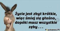 Motto, Poland, Haha, Memes, Funny, Quotes, Quote, Quotations, Ha Ha