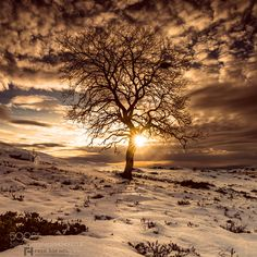 The sun and the tree.. by holofoten #nature #travel #traveling #vacation #visiting #trip #holiday #tourism #tourist #photooftheday #amazing #picoftheday