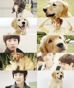 EXO as animals  →  Chanyeol as a golden retriever  ft. bunny baek