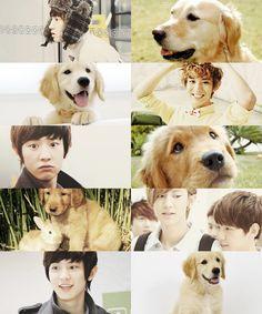 EXO as animals→ Chanyeol as a golden retriever ft. bunny baek