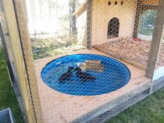 Chicken coops are common on the homestead websites. But duck houses are an equally necessary thing for people who have