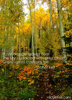 Leaves Float-Blog-Haiku