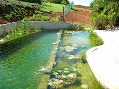 Amazing Schwimmteich seerosen regenerationszone schwimmzone