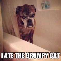 Grumpy Dog!