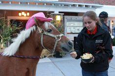 Ginger loves our nachos too Nachos, Riding Helmets, Fans, Star, All Star, Tortilla Chips, Red Sky At Morning