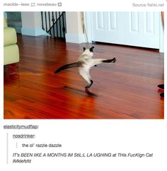 But, they can also be absolute funny and amusing. Funny Animal Memes, Cute Funny Animals, Cat Memes, Funny Cute, Dankest Memes, Cute Cats, Funny Memes, Hilarious, Funny Cartoons