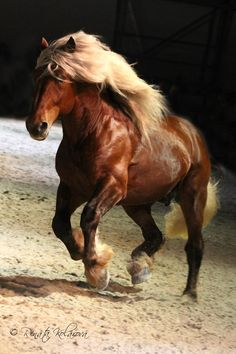 Horses are so majestic and powerful. To know a horse is to love him. There is no bigger heart, than the horse's.