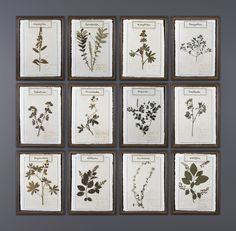 Ateliers C & S Davoy - Cadres Herbiers sur Velin d'Arches - Herbarium frames on Velin Paper #atelierscsd #curiosité #curiosity #collection #decoration #interior  #botanique  #botany #herborist