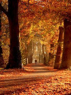What a beautiful walkway!