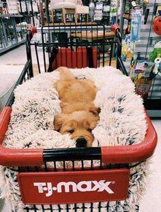 puppies sleeping through the night . puppies sleeping together . puppies sleeping in bed . Super Cute Puppies, Cute Baby Dogs, Cute Little Puppies, Super Cute Animals, Cute Dogs And Puppies, Cute Little Animals, Cute Funny Animals, Doggies, Tiny Puppies