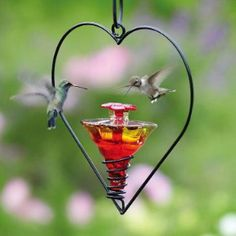 Blown Glass Hummingbird Feeder on Hanging Heart graces the garden while enticing tiny sprites! Unique feeder with powder coat metal heart shape hanger features coil design for stability, includes s-ho Glass Hummingbird Feeders, Hummingbird Garden, Humming Bird Feeders, Hummingbird Food, Little Birds, Love Birds, Beautiful Birds, Beautiful Hearts, Hanging Hearts