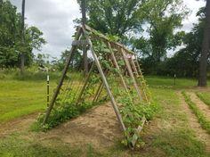 A-Frame Garden Trellis | Journey with Jill
