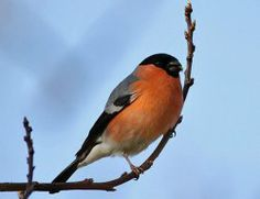 Winter Birdhouse For Common Garden Birds