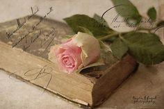 A rose for you by Kerstin Frank art, via Flickr