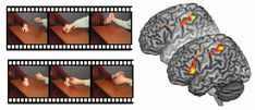Reduced spontaneous (back) but normal deliberate (front) brain activity in psychopathic criminals while viewing movies