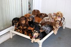 Who wouldn't want a collection of weenie dogs? :)