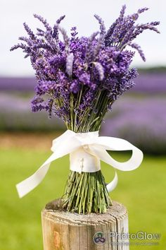 Wedding Bouquet Showcasing Fresh Lavender Hand Tied With Ivory Ribbon/Bow~~