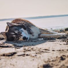 Pacific Northwest life. #BeachBum  by goldilocksandthewolf