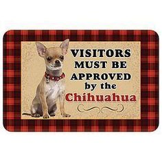 Effective Potty Training Chihuahua Consistency Is Key Ideas. Brilliant Potty Training Chihuahua Consistency Is Key Ideas. Merle Chihuahua, Cute Chihuahua, Chihuahua Puppies, Chihuahua Quotes, Chihuahuas, Teacup Chihuahua, Akita, Rottweiler, Easiest Dogs To Train
