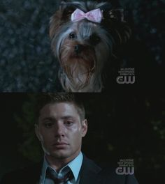 Supernatural: one of my favorite episodes... Dean afraid of a 4 pound yorkie with a pink bow in her hair! Hahaha