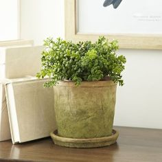 Charlton Home Cormac Earthenware Pot Planter with Saucer (Set of Urn Planters, Square Planters, Ceramic Planters, Hanging Planters, Plastic Planter Boxes, Window Planter Boxes, Concrete Pots, Concrete Garden, Indoor Flower Pots