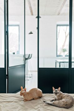 Black & White Apartment in Moscow by Crosby Studios | Yellowtrace