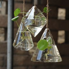 With love, from the science lab. This trio of hanging vases brings a cool, eclectic look to your home or office. Created from the same glass used for beakers and laboratory bottles, this collection is as strong as it is stylish. <br>    <ul><li> Hanging vases in eclectic geometric shapes </li>  <li> Crafted from durable borosilicate glass with 6.56 foot long hemp rope </li>  <li> Each vase has two side holes for plant cuttings or flowers &lt...