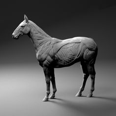 horse anatomy sculpture