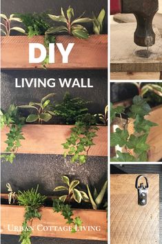 DIY your own living plant wall in a few easy steps. I made three hanging boxes out of reclaimed fence boards. Plant Wall Diy, Diy Wall Planter, Indoor Plant Wall, Indoor Planters, Indoor Garden, Planter Boxes, Urban Cottage, Cottage Living, Garden Wall Art