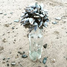 #goosebarnacles #anglesey ! Anglesey, Plants, Plant, Planets
