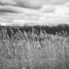 © Lars Ternes Wien 2016 Schilf Landschaft Berge am Attersee  #reed #clouds #mountain #Schilf #berge #wolken #blackandwhite #bnw #monochrome #instablackandwhite #monoart #insta_bw #bnw_society #bw_lover #bw_photooftheday #photooftheday #bw #instagood #bw_society #bw_crew #bwwednesday #insta_pick_bw #bwstyles_gf #irox_bw #igersbnw #bwstyleoftheday #monotone #monochromatic #noir #fineart_photobw Landscape Photographers, Shag Rug, Black And White, Pictures, Mountains, Clouds, Landscape, Shaggy Rug, Black N White