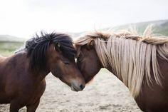 Icelandic Horse by Anna Jarske on 500px