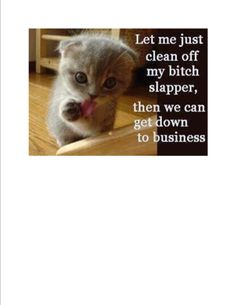 Cat Stock Quote Cat Stock Quote Animals Giff #96710  Funny Cat Giffsfunny Giffs
