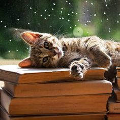 A cat nap on books I Love Cats, Crazy Cats, Cool Cats, Funny Cats, Funny Animals, Cute Animals, Kittens Cutest, Cats And Kittens, Video Chat