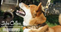fancy french Shiba! Custom Dog Collars, Pet Collars, Breakaway Cat Collars, Fancy Cats, Grey Hound Dog, Dog Wedding, Shiba Inu, Dog Leash, Corgi