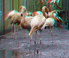 3d Photo, Fuji, Flamingo, Pictures, Flamingo Bird, Photos, Flamingos, Grimm