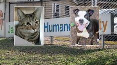 Fosters needed, free adoptions offered as JHS is only open shelter in Jacksonville Veterinary Services, Training Classes, Losing A Pet, Humane Society, Pet Care, The Fosters, Boston Terrier, Shelter