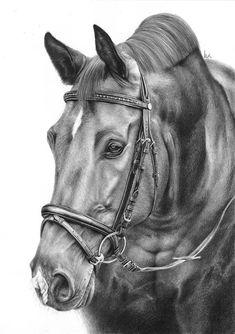 Portret konia w błyszczącej, czystej tranzelce.