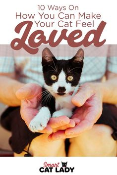 If you want nothing but to shower your cats with love and affection then here are some ways on how you can make your cat feel safe and loved.    #smartcatlady #cat #loved #care