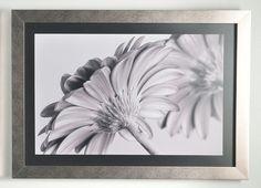 Quadro Flores Preto e Branco Margaridas em Contraste 2